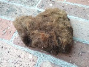 Lanolina e cover in lana per pannolini lavabili